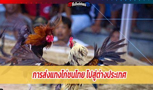 การส่งแทงไก่ชนไทย ไปสู่ต่างประเทศ