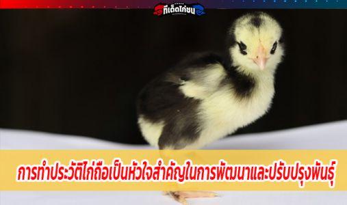 การทำประวัติไก่ถือเป็นหัวใจสำคัญในการพัฒนาและปรับปรุงพันธุ์