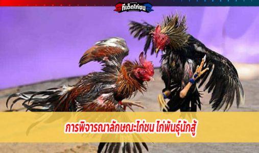 ไก่พันธุ์นักสู้