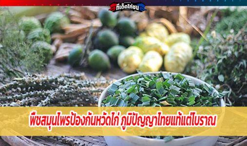 พืชสมุนไพรป้องกันหวัดไก่ ภูมิปัญญาไทยแท้แต่โบราณ