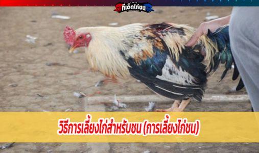 วิธีการเลี้ยงไก่สำหรับชน (การเลี้ยงไก่ชน)
