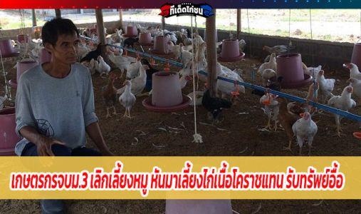 เกษตรกรจบม.3 เลิกเลี้ยงหมู หันมาเลี้ยงไก่เนื้อโคราชแทน รับทรัพย์อื้อ