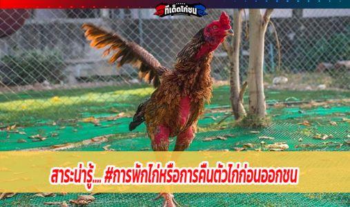 สาระน่ารู้.... #การพักไก่หรือการคืนตัวไก่ก่อนออกชน