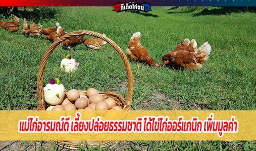 แม่ไก่อารมณ์ดี เลี้ยงปล่อยธรรมชาติ ได้ไข่ไก่ออร์แกนิก เพิ่มมูลค่า