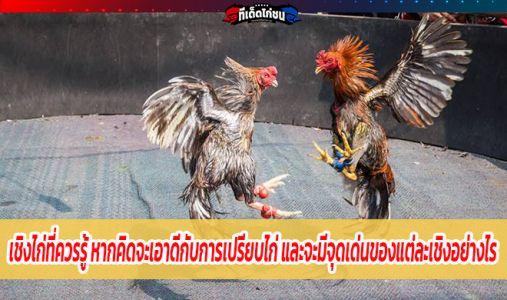 เชิงไก่ที่ควรรู้ หากคิดจะเอาดีกับการเปรียบไก่ และจะมีจุดเด่นของแต่ละเชิงอย่างไร
