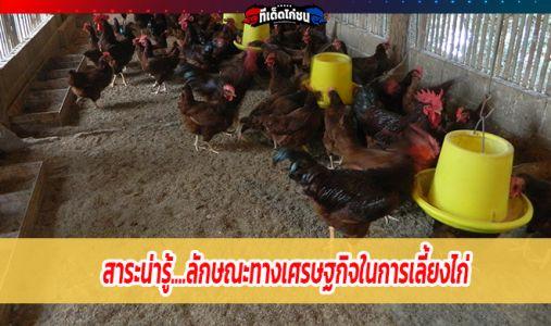 ลักษณะทางเศรษฐกิจในการเลี้ยงไก่